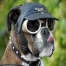 dogglesdog