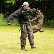 004 training equipment for dogs