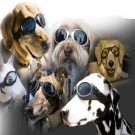 doggles set 002