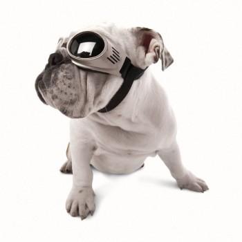 Doggles Originalz