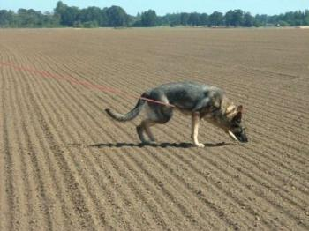 Gripper Tracking Lead