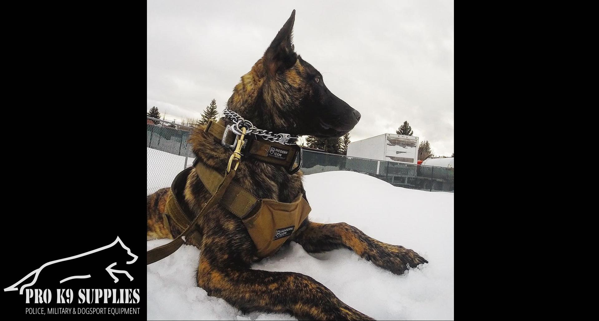 k9-training-equipment
