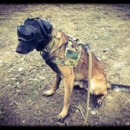 Mutt Muffs Service Dogs