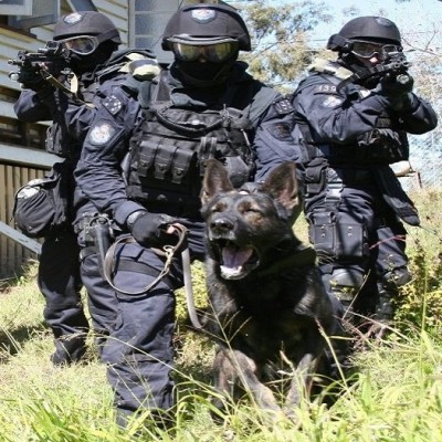 Tactical Service Dog Gear