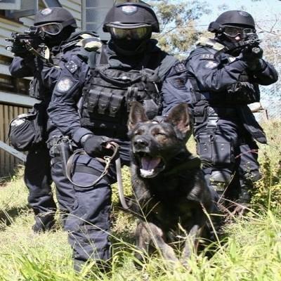 Tactical Service Dog Gear