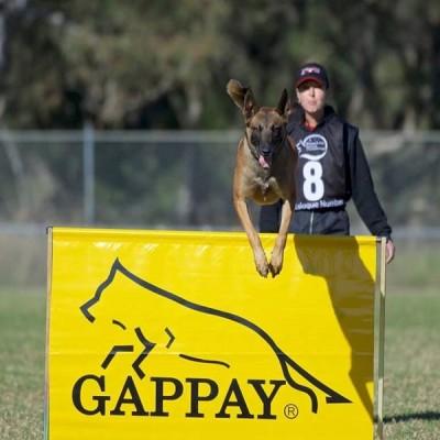 K9 Dog Training Equipment